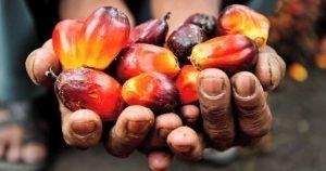Palm Yağı Nedir? Palm Yağı Zararları ve Kalori Değerleri