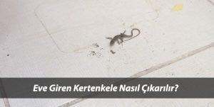 Eve Giren Kertenkele Nasıl Yakalanır?Evde Kertenkele Tuzağı Yapımı