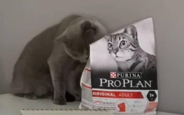en-iyi-kedi-mamasi-pro-plan